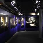 bspotlight-rembrandt01